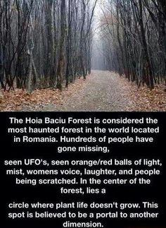 I'd love to check this out :) Hoia Baciu Forest in Cluj-Napoca Romania