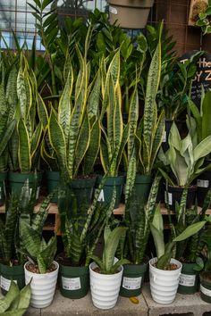 Easy Houseplants That Anyone Can Grow