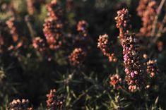 Flores al atardecer Floral, Pastel, Flower Photos, Naturaleza, Plants, Fotografia, Cake, Flowers, Flower