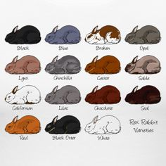 rex rabbit colors - my top three favorite colors (plus broken) are: black otter, blue, and castor