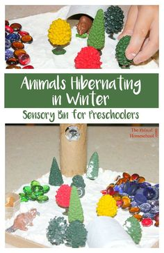 As promised, here is an awesome activity about animals hibernating in Winter! We have made some sensory bins for Preschoolers to reinforce all the learning we have been doing about animals that hibernate.