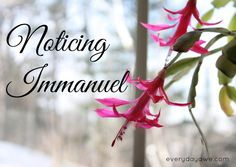 The light of Christ is our hope. And through the Holy Spirit, we can be the symbol of that hope to others.  Noticing Immanuel Advent Series Day 12
