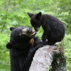 Bunny Bears Forever Canada Mom And Cub With Love