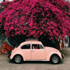pink VW Bug You are in the right place about car hacks Here we offer you the most beautiful pictures about the car ideas you are looking for. Carros Retro, Vw Cabrio, Kdf Wagen, Vw Vintage, Vintage Roses, Vintage Style, Cute Cars, Car Photography, Photography Flowers