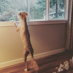 """Darby & Jello on Instagram: """"Who's there?? ☆☆☆ Naked dog??? Need clothes?? We will more than likely be running a sale on Valentine prints this weekend.  I have a TON of…"""" Sale On, Jello, Naked, Running, Dogs, Prints, Animals, Clothes, Instagram"""