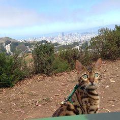 Big cat, little world.