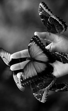 Papillons ~ Animaux