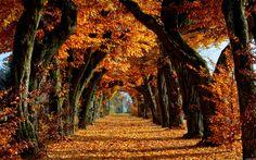 Landscape Fall Wallpaper Widescreen #pJo