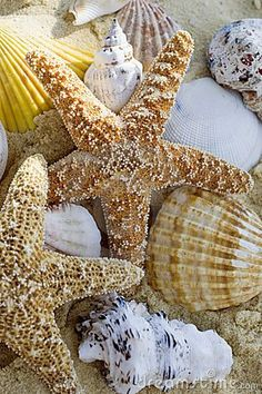 seashells & starfishes. On my bucket list to go to a bunch of beaches and bring home shells like these as mementos!!!