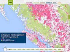 British Columbia's Intact Forest Landscapes Are Threatened