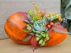 Succulent  Centerpiece, Fall Succulent Centerpiece, Thanksgiving Succulent Tabletop - Succulent Fall  Wedding Decor Fall Pumpkin Centerpiece (@Erica McNees we should make these!)