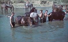 Ukraine, Crimée, Des soldats allemands de retour du front prennent un peu de repos avec leurs chevaux lors d'un bain commun |