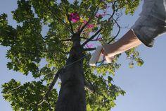 Drachen im Baum