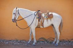 Like the colors, simplicity and of course the patient horse.