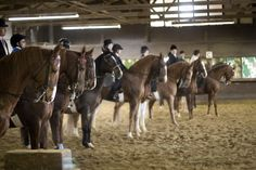 New Traditions Riding Academy in Palos Hills, IL.
