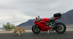 Coyote and Ducati