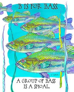 """Fine Art Daily - January 7, 2015  Collective Nouns  B is for Bass  A group of Bass is a Shoal.  """"Alive without breath, As cold as death; Never thirsty, ever drinking, All in mail never clinking.""""  ― J.R.R. Tolkien, The Hobbit"""