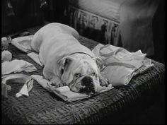 Bulldogs in movies -- Since you Went Away, 1944. Pinned by Judi Crowe.