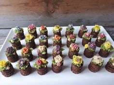 Bite-sized cakes with flowers made raw vegan gluten-free, by Sweet Little Sirin