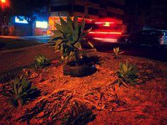 Resulta que en el parterre de la Eloy Alfaro dejaron botadas unas plantas, unos días después con una llanta (neumático) y una pala se armó este mandala apuntando a los 4 puntos de la tierra #Porlatierramemuevo
