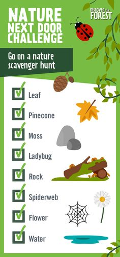 parks and forests are full of new discoveries Create a scavenger hunt checklist including items like moss pinecones ladybugs and spiderwebs Better yet encourage your kids. Summer Activities, Learning Activities, Preschool Activities, Outdoor Activities, Kids Learning, Nature Activities, Preschool Lessons, Educational Activities, Teaching Ideas