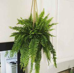Na svakih 9 kvadrata stavite ove biljke i ne brinite za rak: Čiste vazduh u roku od 24h!