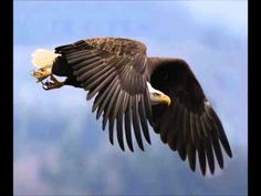 birds animals eagle hd wallpaper is a HD Wallpaper posted in Animals and Birds category.You can cut a part from photo birds animals eagle hd wallpaper, just Eagle Images, Eagle Pictures, Eagle Bird, Eagle Wings, Tier Wallpaper, Animal Wallpaper, Eagle Wallpaper, Eagle In Flight, Birds In Flight