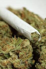 Red-Eyed Revelations: The Killer Drug!... Marijuana?