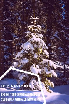 Oh christmas tree, oh christmas tree ... soon decorated with beautiful gold, silber and red balls.  Unser künftiger Weihnachtsbaum, bevor er mit  Kugeln in silber und rot dekoriert wird. #villavienna #weihnachteninwien #christmasinvienna #christmastree #christbaum #weihnachtsbaum