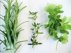 One of our favorite parts of summer is the abundance of fresh herbs--often in our own back yards