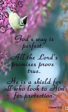 2 Samuel22:31