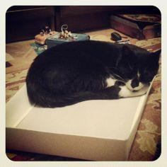 Pudełko jednak wygrywa - łóżko może mięciutkie, ale pudełko ciągnie kotka....