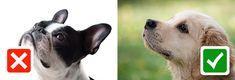 Millaista eläinkuvaa välität? - ELÄIMELLISTÄ VIESTINTÄÄ