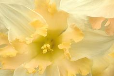 Flower by Bahman Farzad, via Flickr