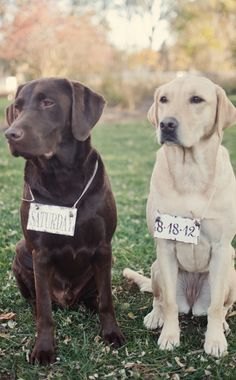 Save the dates with your dogs!..... Should've done this!!! Adorable!