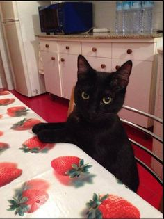 # Black is beautifulContents# Black is beautiful# Black Cats make take pic selfie more interesting# They are more worthy of … Grey Cats, Black Cats, Kittens Cutest, Cats And Kittens, Black Cat Appreciation Day, Japanese Cat, Lovely Creatures, All About Cats, Beautiful Cats