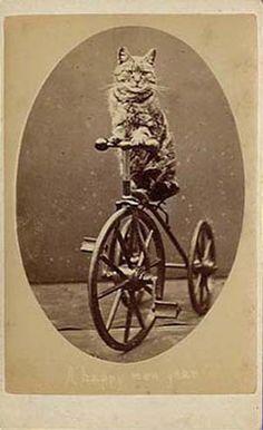 Lol Cats, 1870.