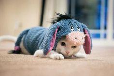 donkey kitten #cutecats #kitten #cats