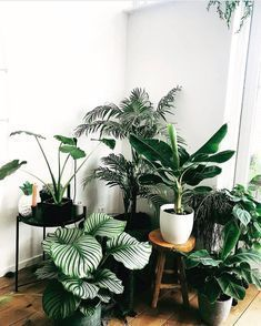 House Plants Plant Stand Design Ideas for Indoor Houseplants - Page 8 of 67 - LoveIn Home, Small Indoor Plants, Little Plants, Indoor Plant Decor, Plantas Indoor, Decoration Plante, Low Light Plants, Plant Aesthetic, Calathea, House Plants Decor