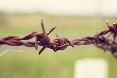 Barbed wire was the end of open range
