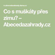 Co s muškáty přes zimu? – Abecedazahrady.cz Presidents