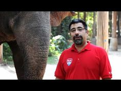 Visit an Elephant Camp in Thailand with GLA! Elephants are amazing!