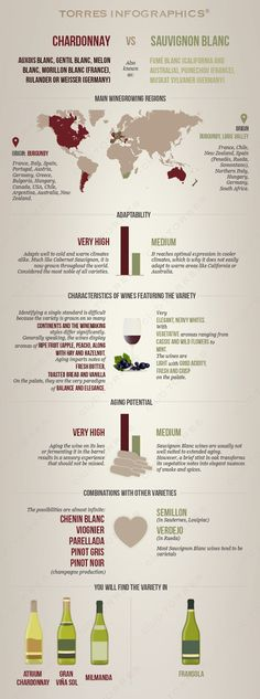 White Wine Grape Variety: Chardonnay vs. Sauvignon blanc | Club Torres #Comparison#