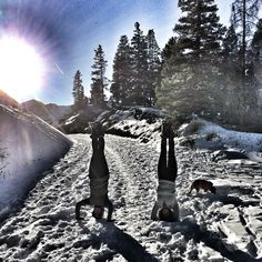 Spending the day with the birthday girl @brttny_guido with a little hiking and some inversions. #colorado #breckenridge #yoga #yogagirl #inversion #mountains #headstand #snow #YogaEveryDamnDay #yogajourney #igyoga #Travel #hiking #explore