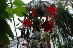 Flotte blomster i  vores orangeri .Sjovt at dyrke dem frem og lave nye planter.