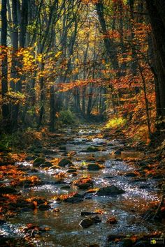Fall Pictures, Nature Pictures, Pretty Pictures, All Nature, Amazing Nature, Beautiful World, Beautiful Places, Autumn Scenes, Nature Scenes