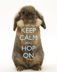 Keep Calm And Hop On - Happy Easter. #PANDORAloves #Rabbit