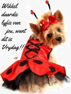 Goeie More, Afrikaans Quotes, Friday Humor, Happy Friday, Animal Photography, Tigger, Good Morning, Teddy Bear, Van