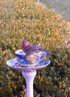 Teacup & Saucer bird feeder. [media_id:3342345] Hellooo Beautiful! Please pose for my Goodwill Bird Feeder post. [media_id:3339405] .59 + .59 + tax = CHEAP! The…