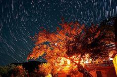 Star trails over illuminated tree #StarTrails #Stars #Sky